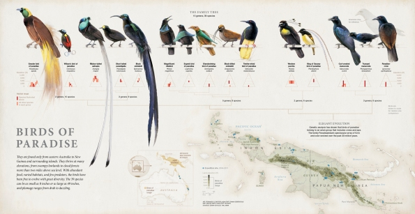 Fernando Baptista_birdsofparadise