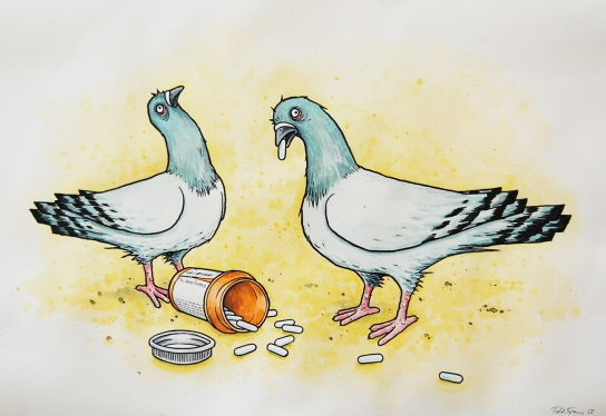 work2_F_pigeons_pills